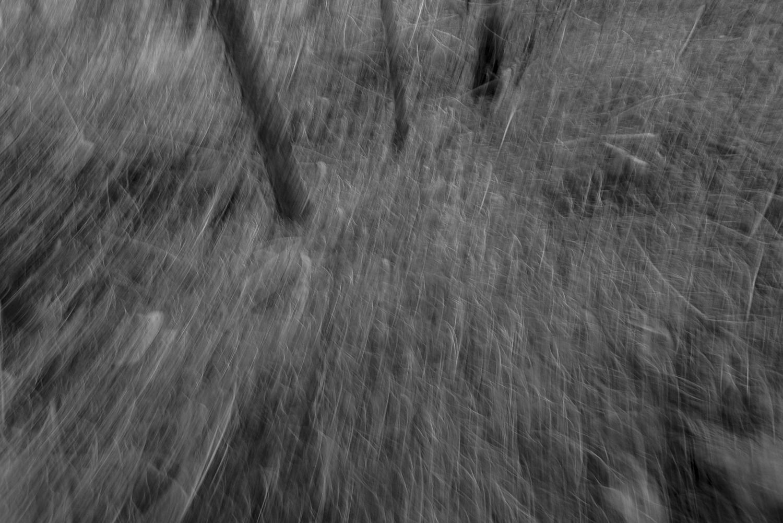 Fotografie Frank Peters: Waldfluchten